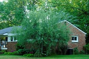 Gardenatoz Cut To Control Blue Willow Garden A Z
