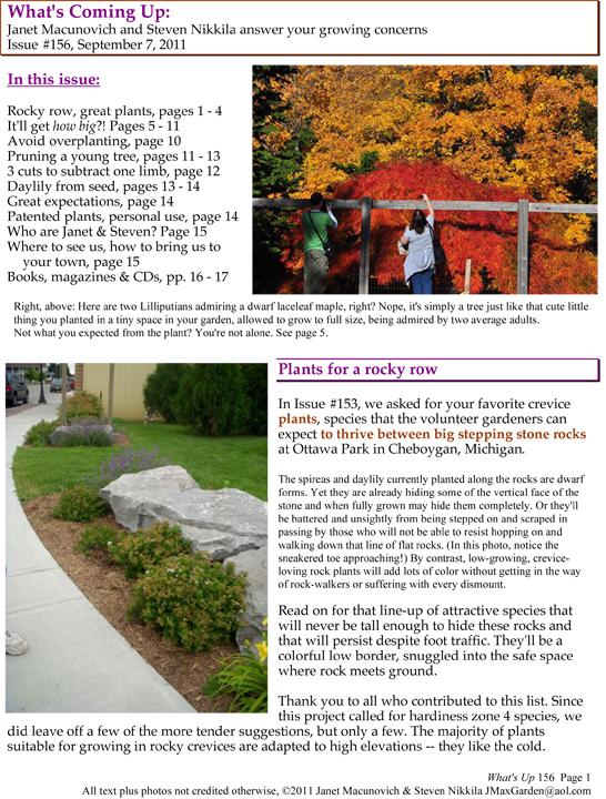 GardenAtoZ Whats Up 156 Rocky garden overplanting prune a