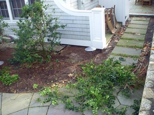 Poda de hollies | Bellas Jardinería
